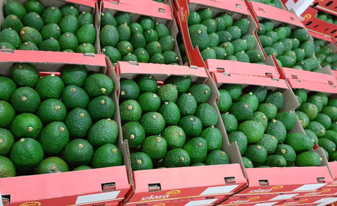 Jupiter Colombia avocados are now in Europe