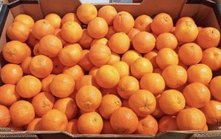 Clementines boxed and available from Jupiter