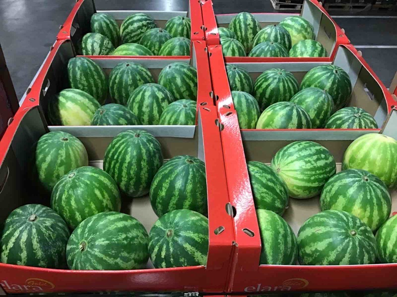 Jupiter Group Costa Rican watermelons