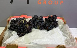 Fresh produce grower and supplier Jupiter Group's Chilean Maylen going to retailers 2