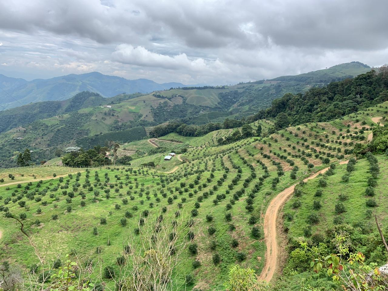 Fresh produce grower and supplier Jupiter Group's Colombian lime field