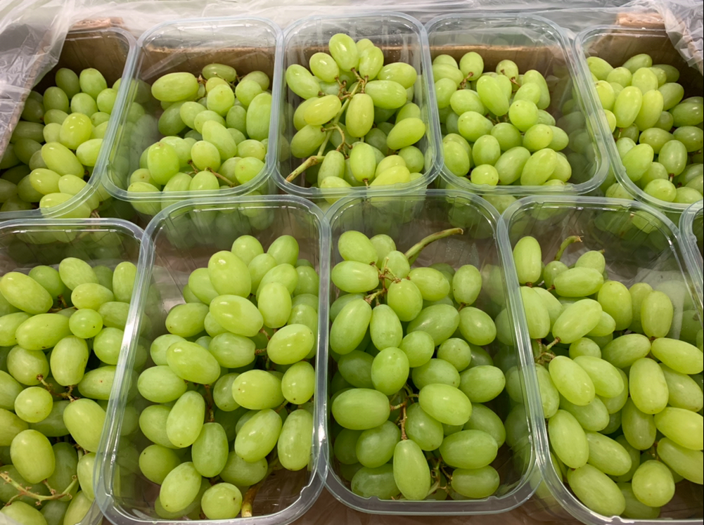 Jupiter Group exporting worlds first Greek ARRA grapes into Asia-punnet