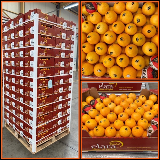 Fresh produce grower Jupiter Group's Moroccan Elara Gold Clementines