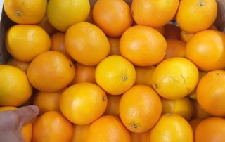 Fresh produce grower Jupiter Group's Moroccan Navel oranges