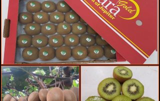 Fresh produce grower Jupiter Group's kiwi on the way to the USA