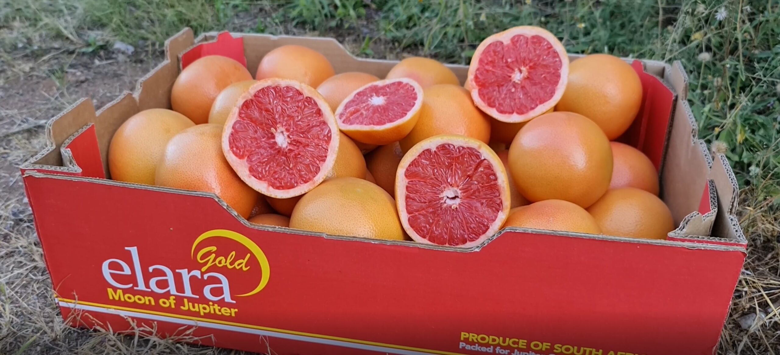 Jupiter Group's Elara Gold grapefruit