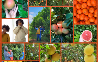 Fresh produce grower Jupiter Group explain why vitamin C is such an important part of your diet