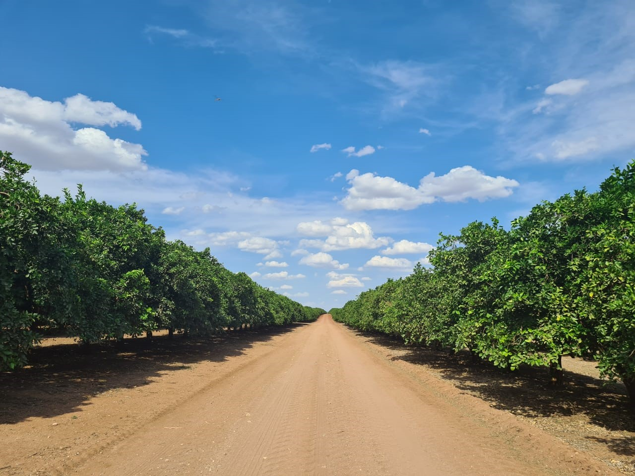Fresh produce grower Jupiter Group's South African farm