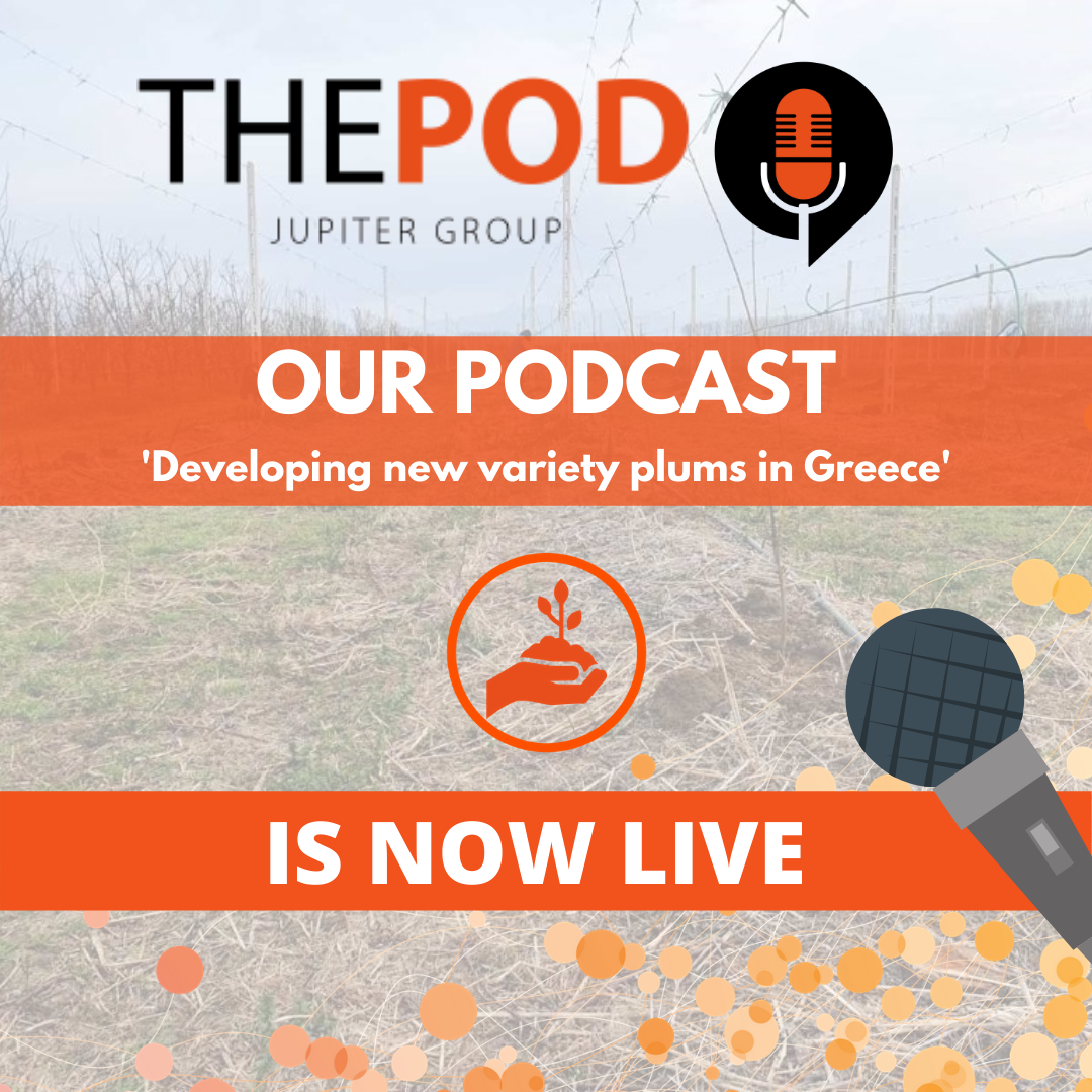 Jupiter Group's podcast Developing new variety plums in Greece LIVE