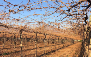 Fresh produce grower Jupiter Group's vineyards are currently on hiatus in Chile as the winter period allows rest