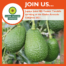Fresh produce grower Jupiter Group's Joint MD Yvonne Tweddle speaking at Global Avocado Congress 2021